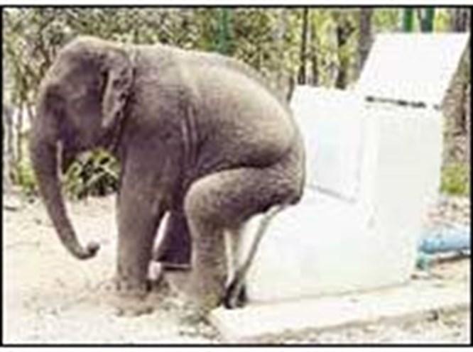 Fillere tuvalet eğitimi